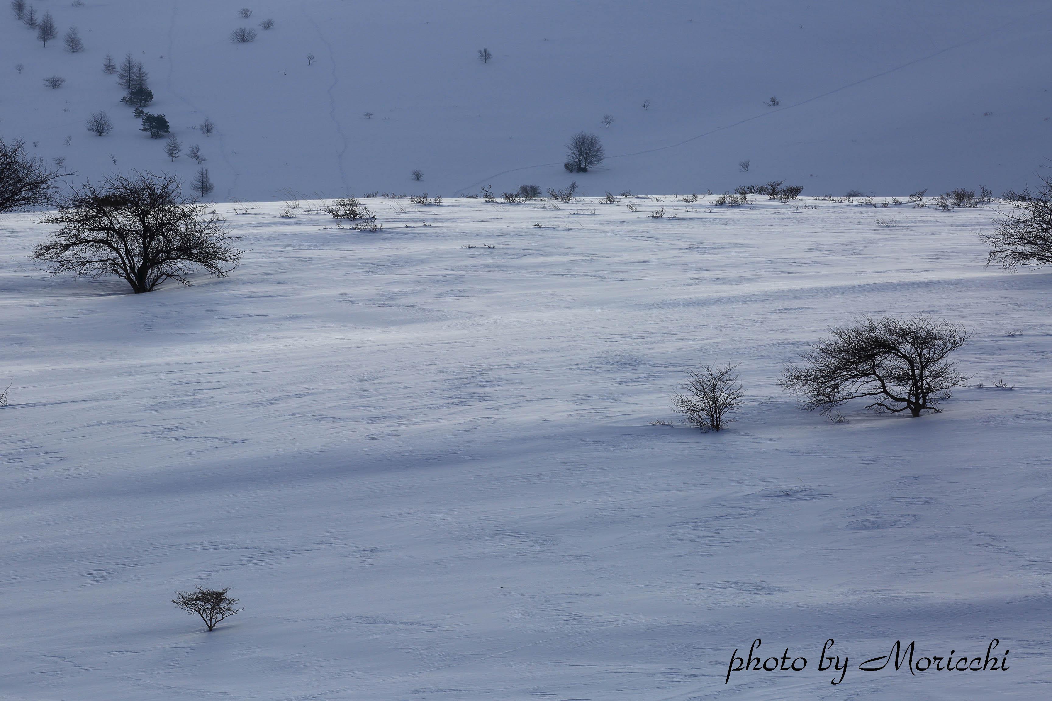 雪原のコピー.jpg